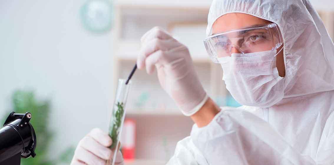 STENOCARE prescription based medical cannabis